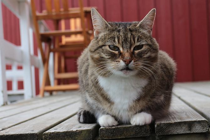 壁纸 动物 猫 猫咪 小猫 桌面 670_447